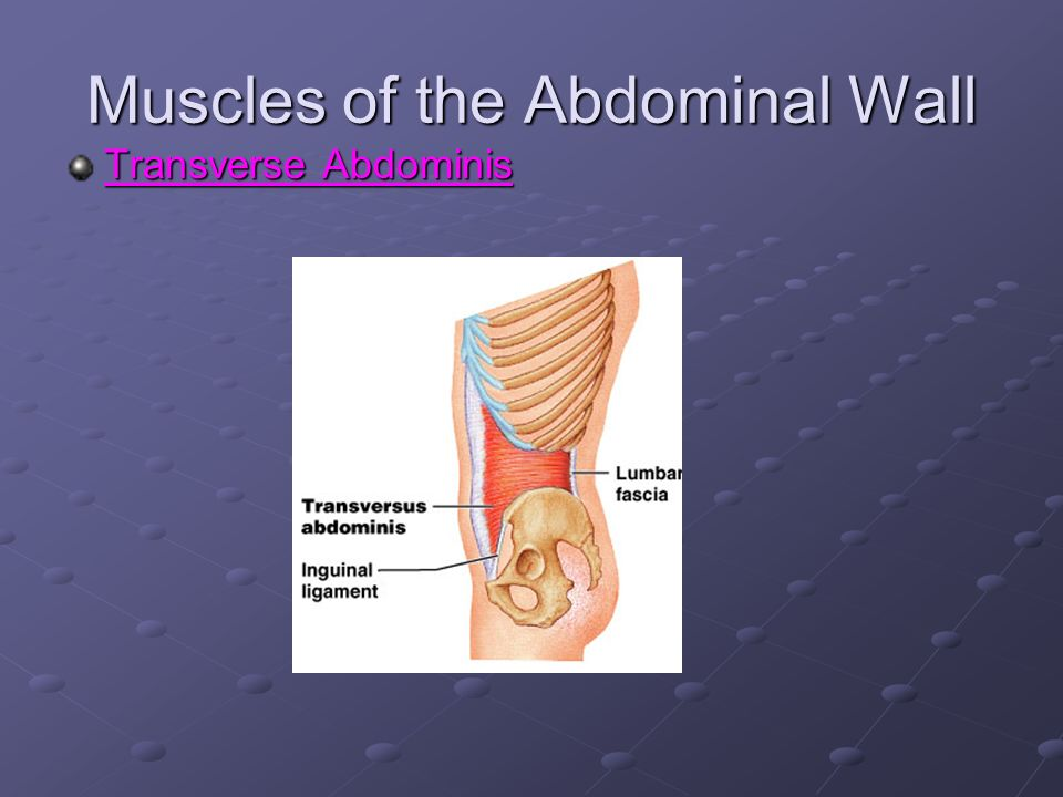 The Trunk and Spinal Column - ppt video online download