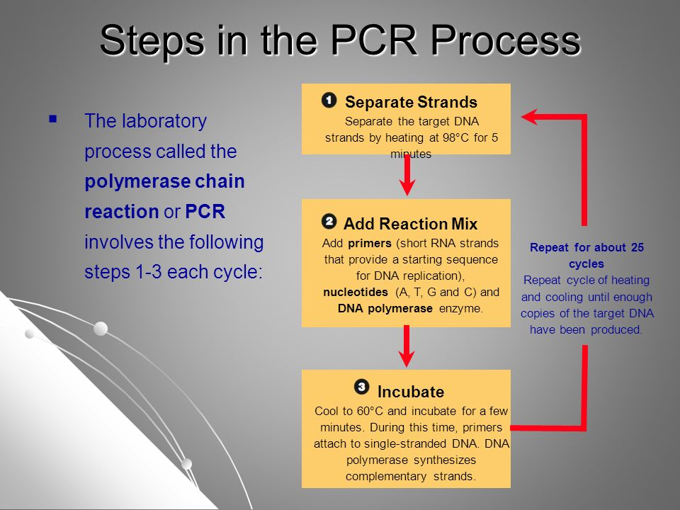 steps in the pcr process