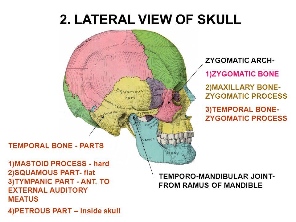 I. CALVARIUM = SKULL CAP- Consists of bones linked by sutures - ppt ...