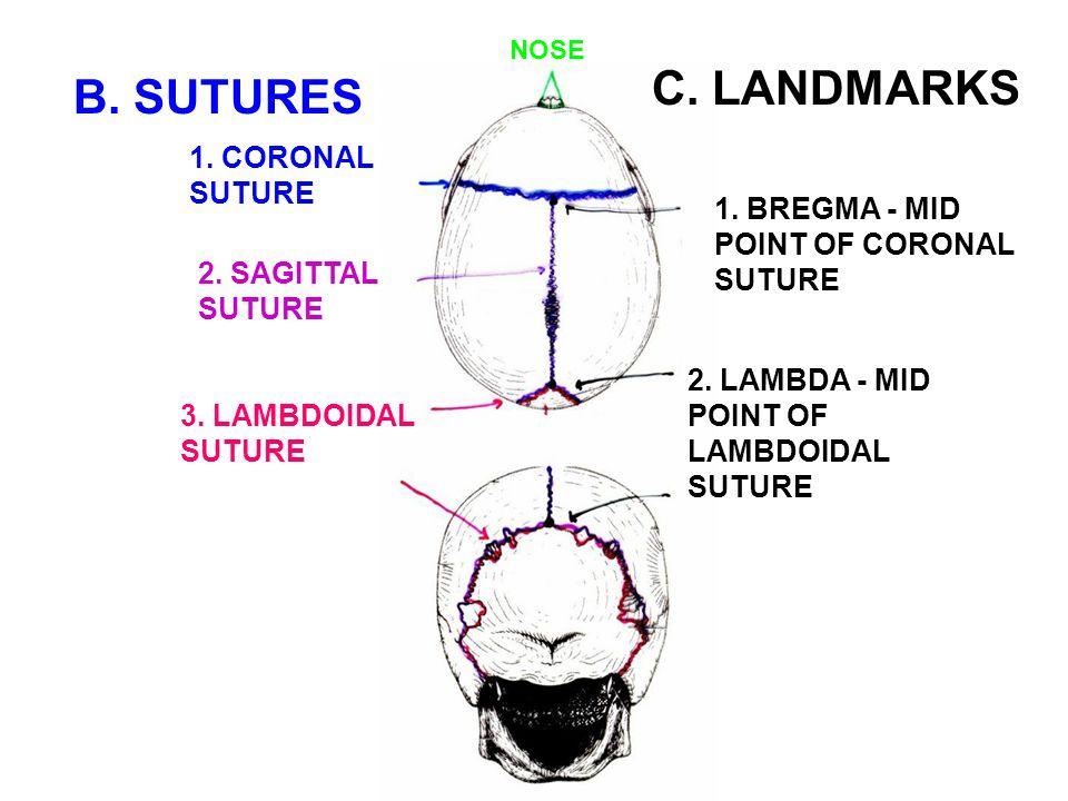 i calvarium skull cap consists of bones linked by
