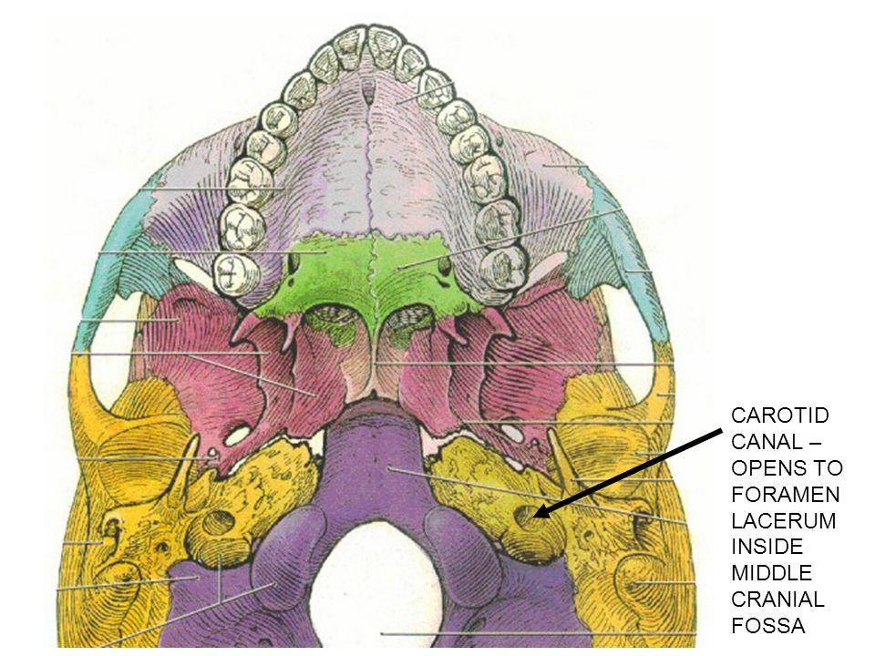 I Calvarium Skull Cap Consists Of Bones Linked By Sutures Ppt