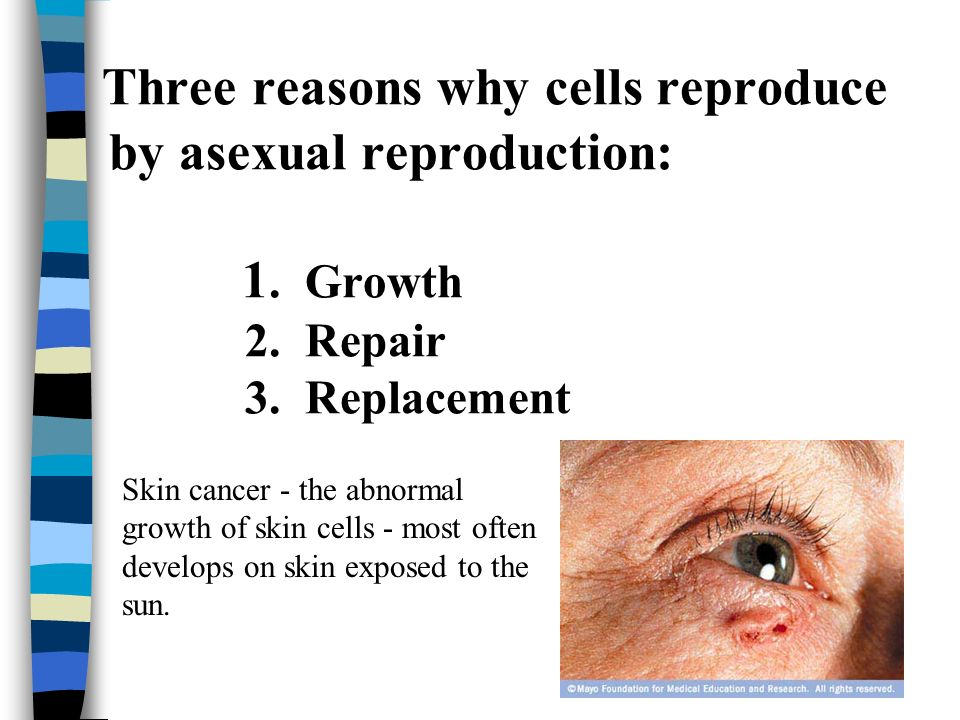 Three reasons why cells reproduce by asexual reproduction