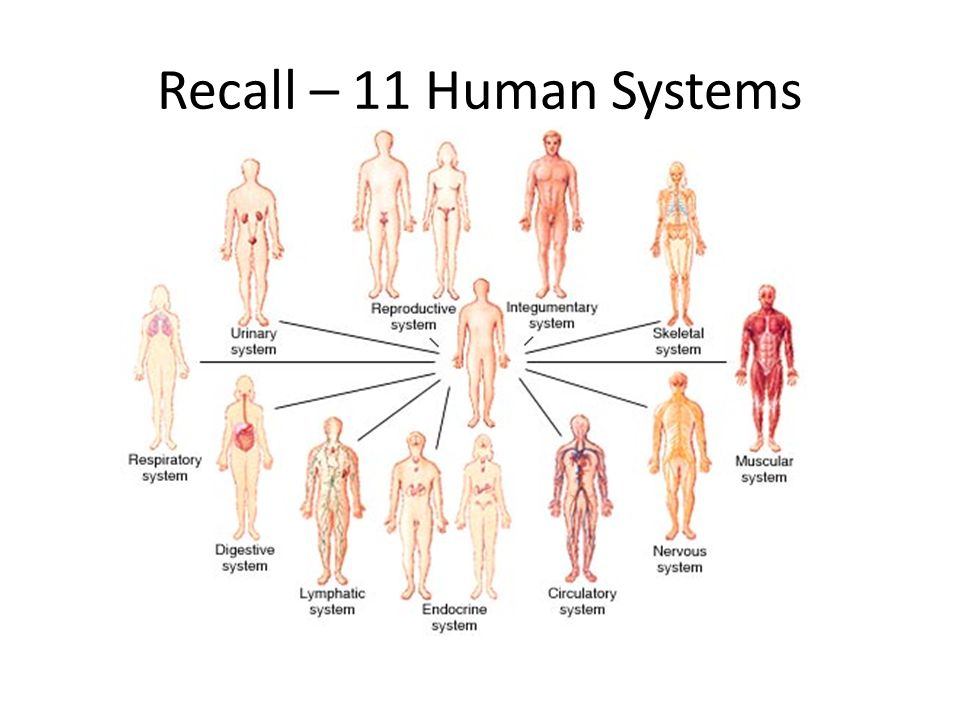 14human Systems Digestive System Ppt Video Online Download