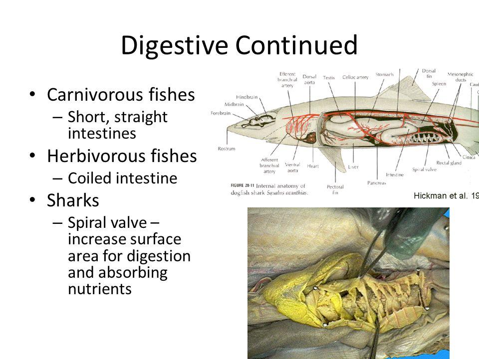 Erfreut Anatomy And Physiology Of Fish Zeitgenössisch - Anatomie Von ...
