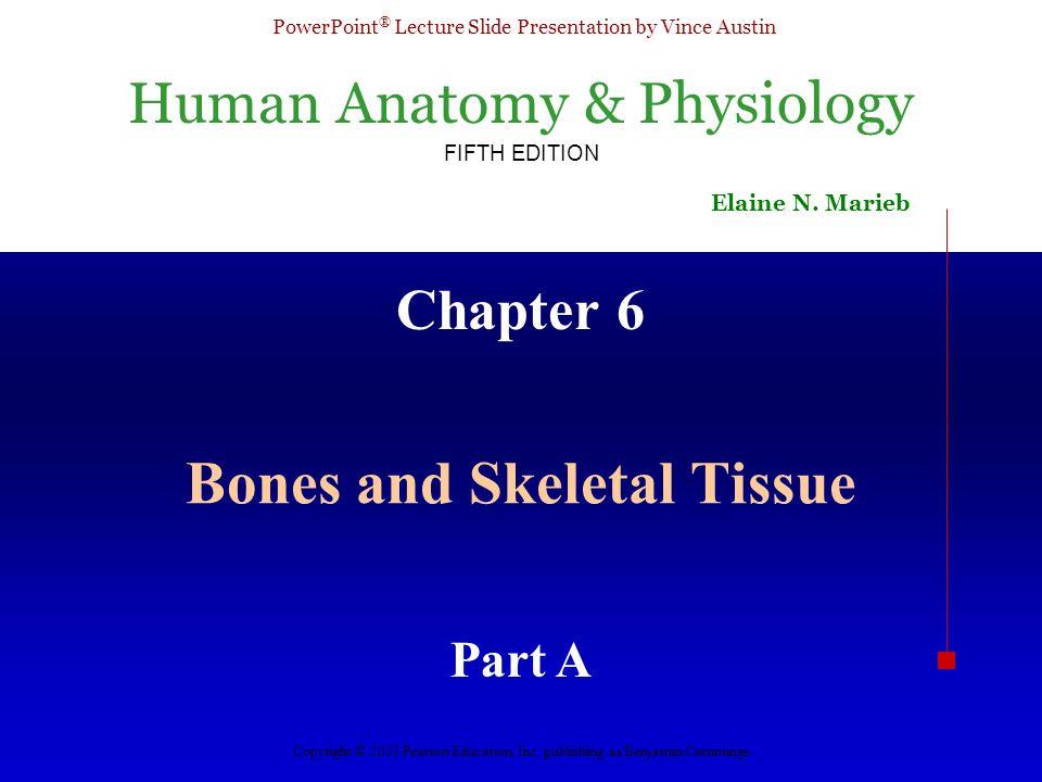 Bones and Skeletal Tissue - ppt download