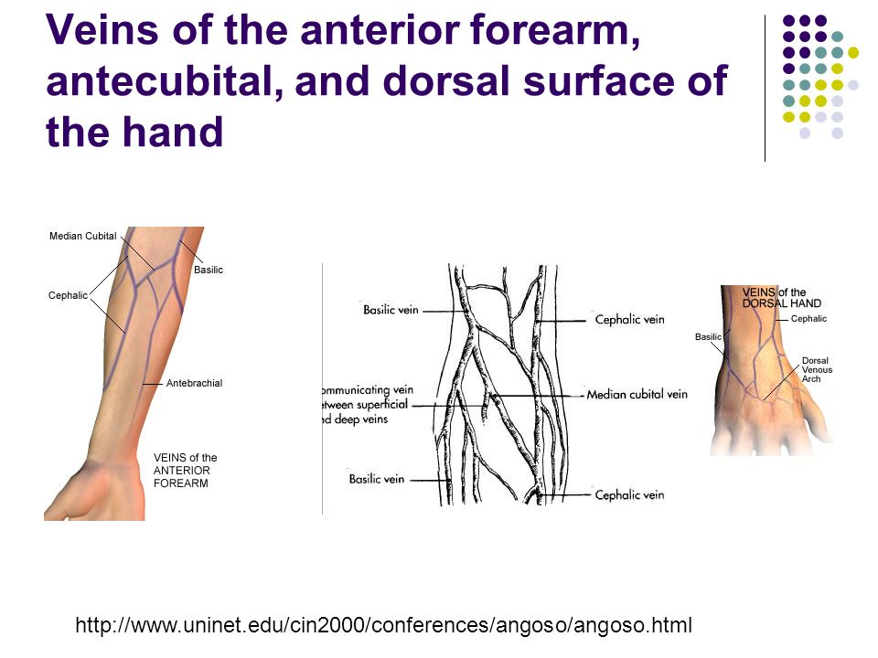 Unit 1 Venous Anatomy Of The Upper Extremity Kyle Thornton Ppt