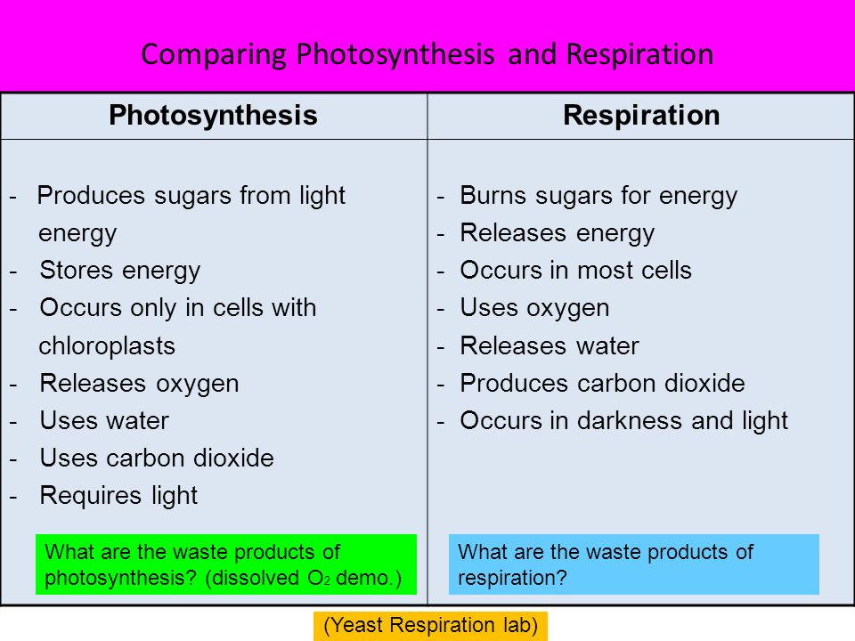similarities and differences between respiration and photosynthesis