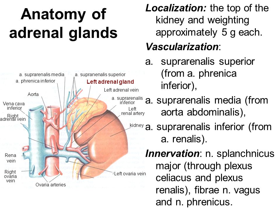 Diseases of the adrenal glands: chronic adrenal insufficiency - ppt ...