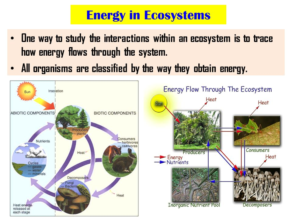 ecosystems to study the interactions between The interactions between populations within an ecosystem are described by the benefit or harm caused to each species in the interaction a niche describes the specific role a population plays within an ecosystem this may be defined by their interaction with other organisms (such as.