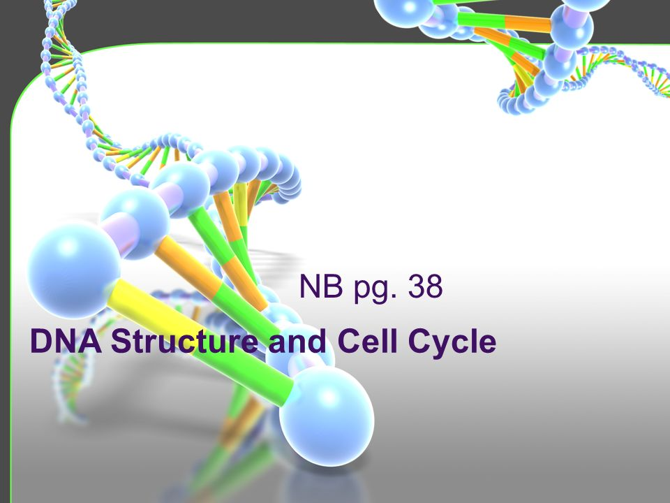 DNA Structure and Cell Cycle