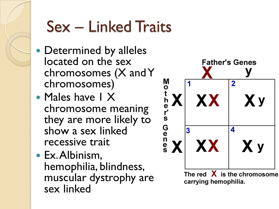Pedigree Analysis Of Sex Linked Recessive Traits