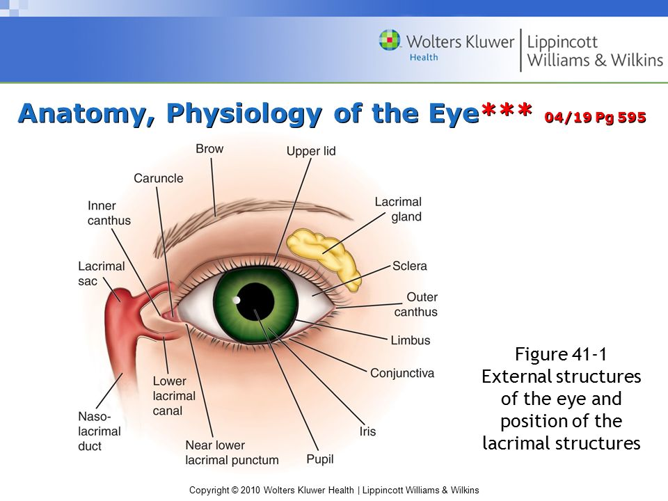 Fine Ophthalmology Anatomy And Physiology Gallery - Anatomy And ...