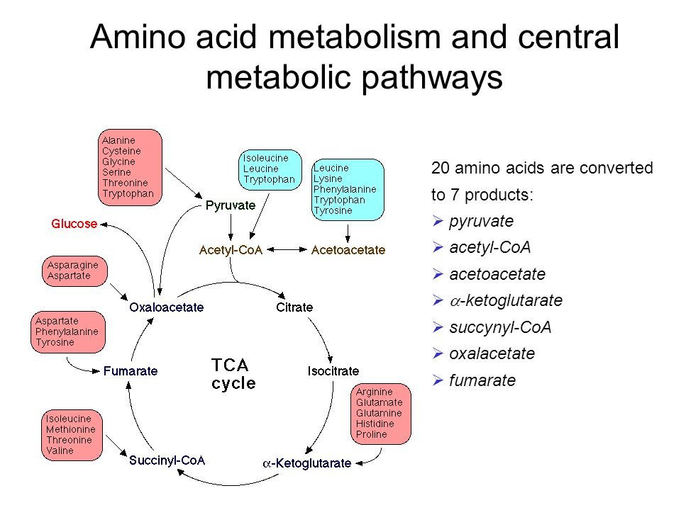 identify an amino acid Amino acids are molecular structures that work together to build proteins in the body, vital for its proper function a requirement in amino acid transformation, asparagine helps the nervous system maintain its equilibrium it also acts as a detoxifier in the system and regulates metabolism.