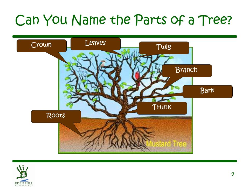 can you name the parts of a tree