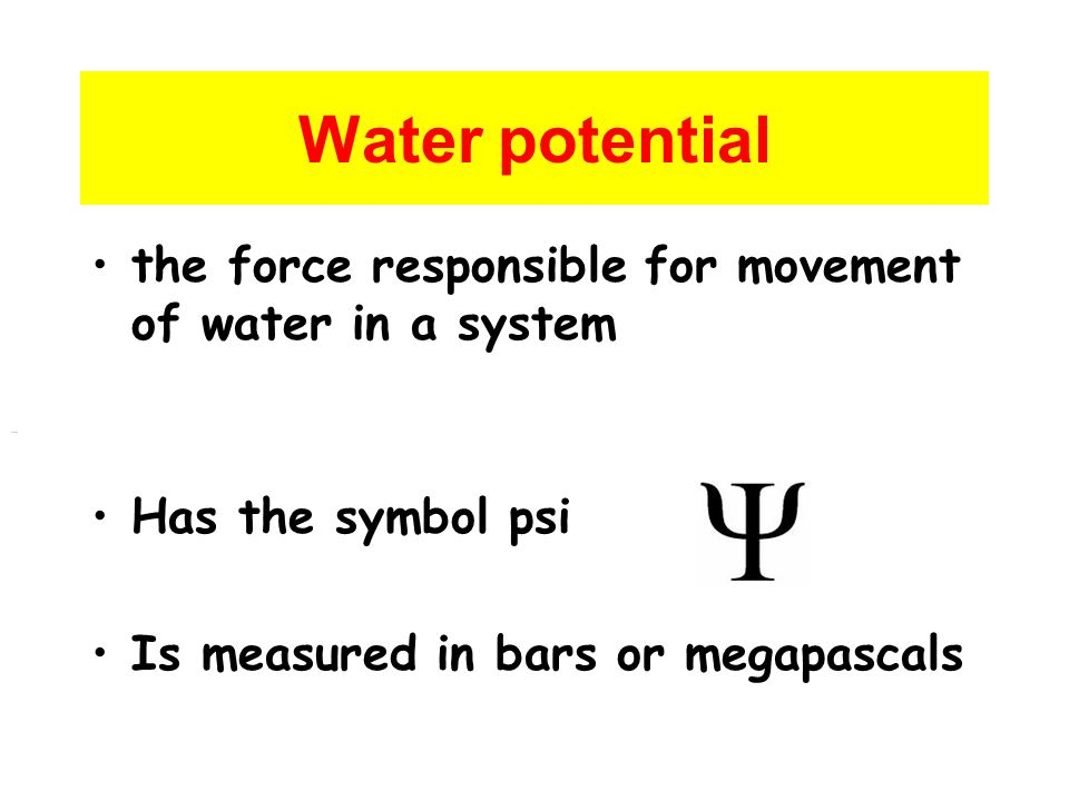 What Is Water Potential Ppt Video Online Download