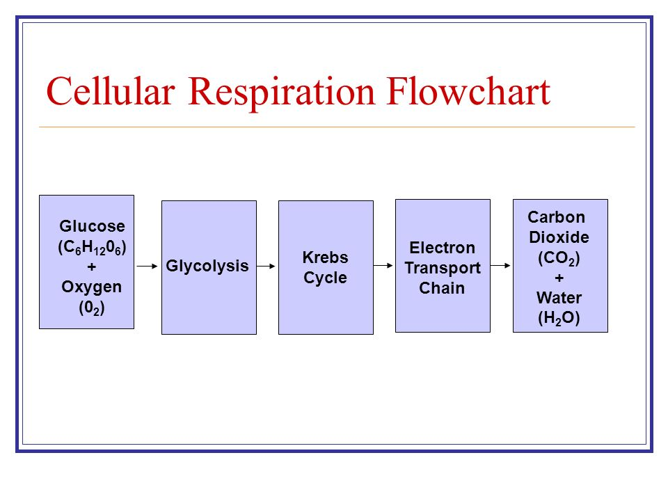 Cellular Respiration Chapter 9 Ppt Video Online Download