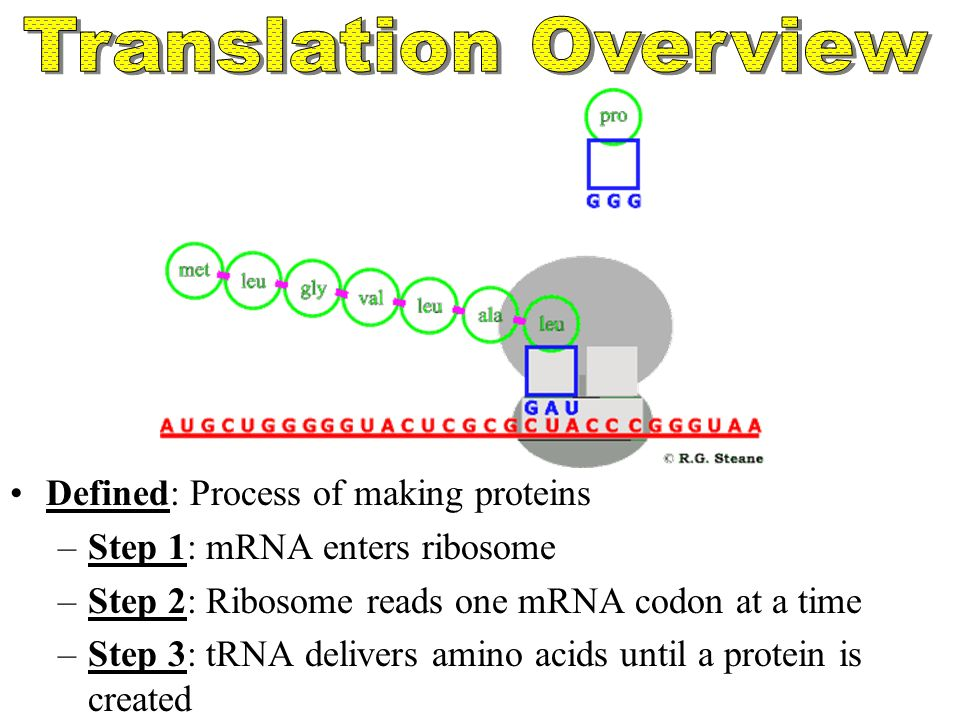 Transcription and translation and the genetic code online.