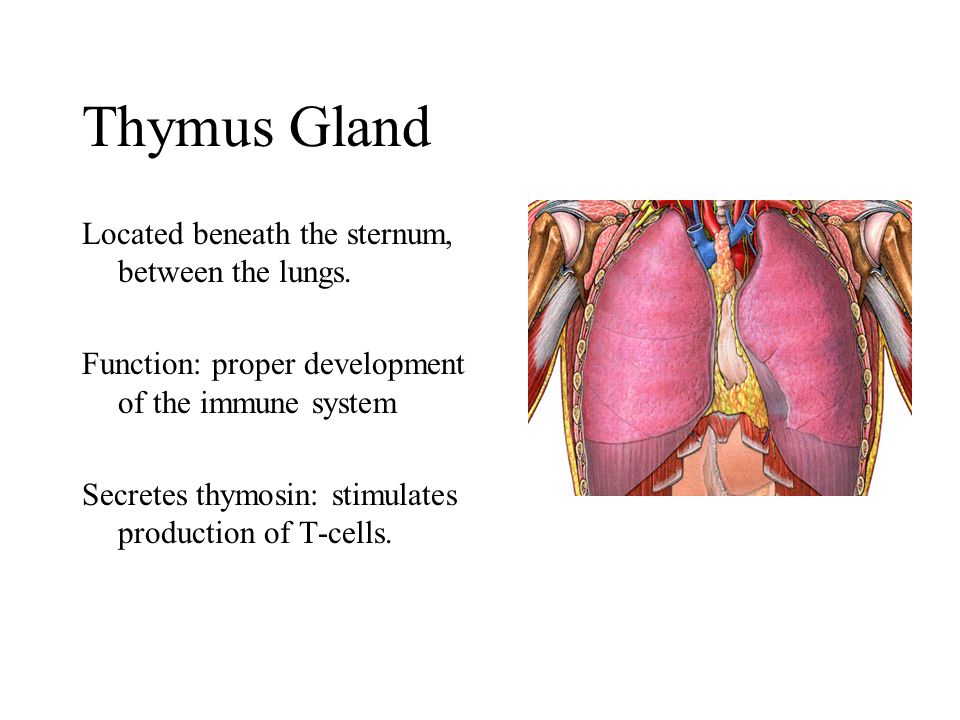 Endocrine System Ch ppt video online download