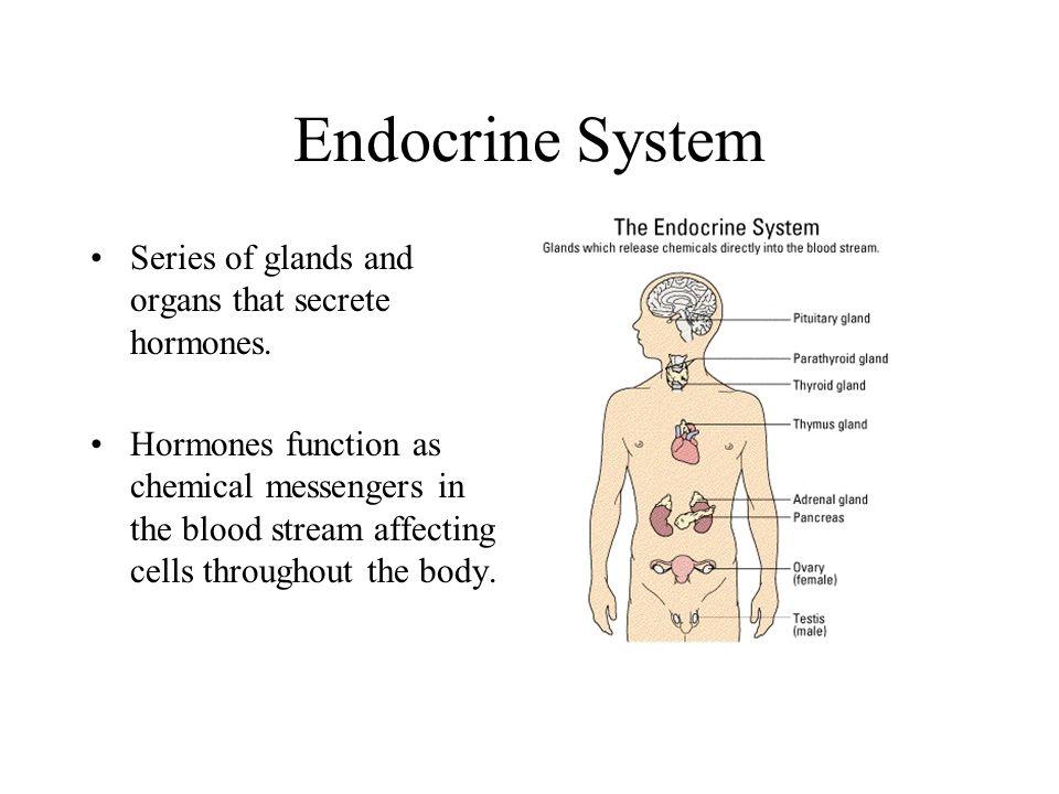 Endocrine System Ch ppt video online download