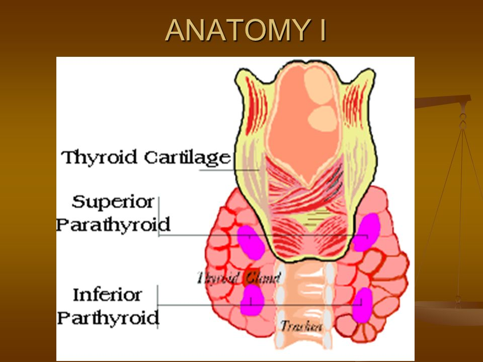 Tracheostomy Cricothyroidotomy Ppt Video Online Download