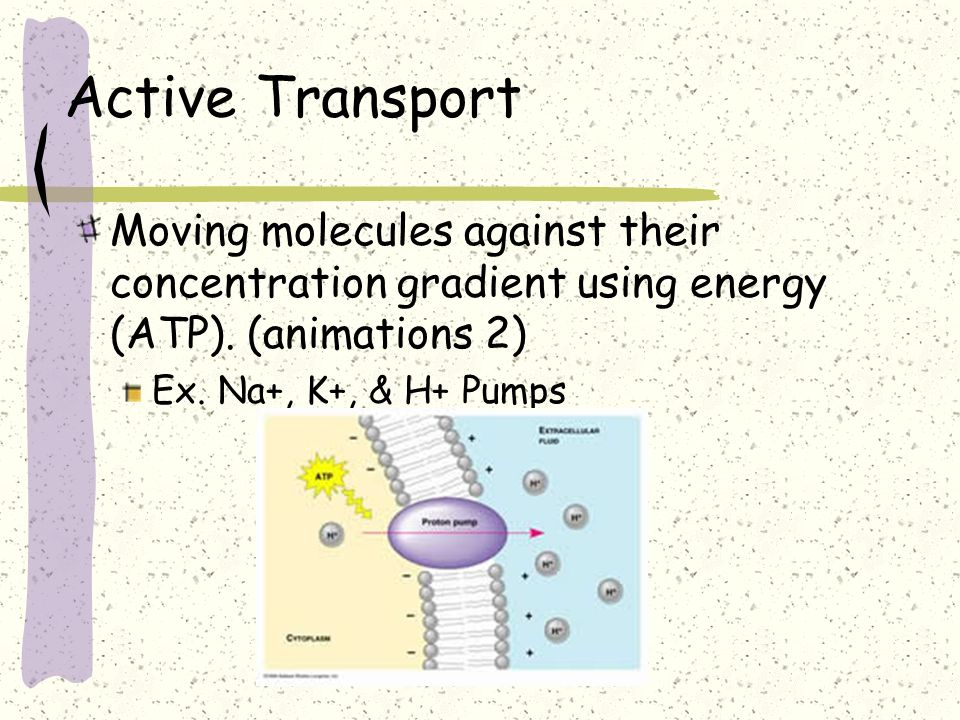 Active Transport Moving molecules against their concentration gradient using energy (ATP). (animations 2)
