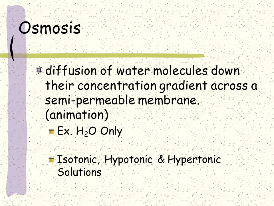Osmosis diffusion of water molecules down their concentration gradient across a semi-permeable membrane. (animation)