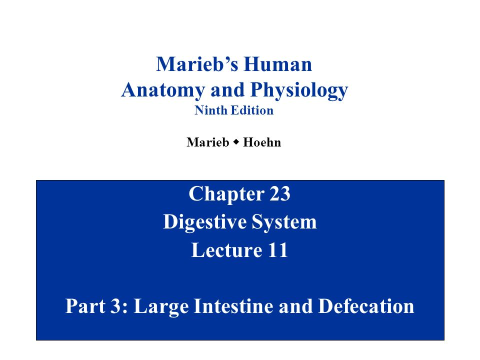 Anatomy and Physiology Part 3: Large Intestine and Defecation - ppt ...