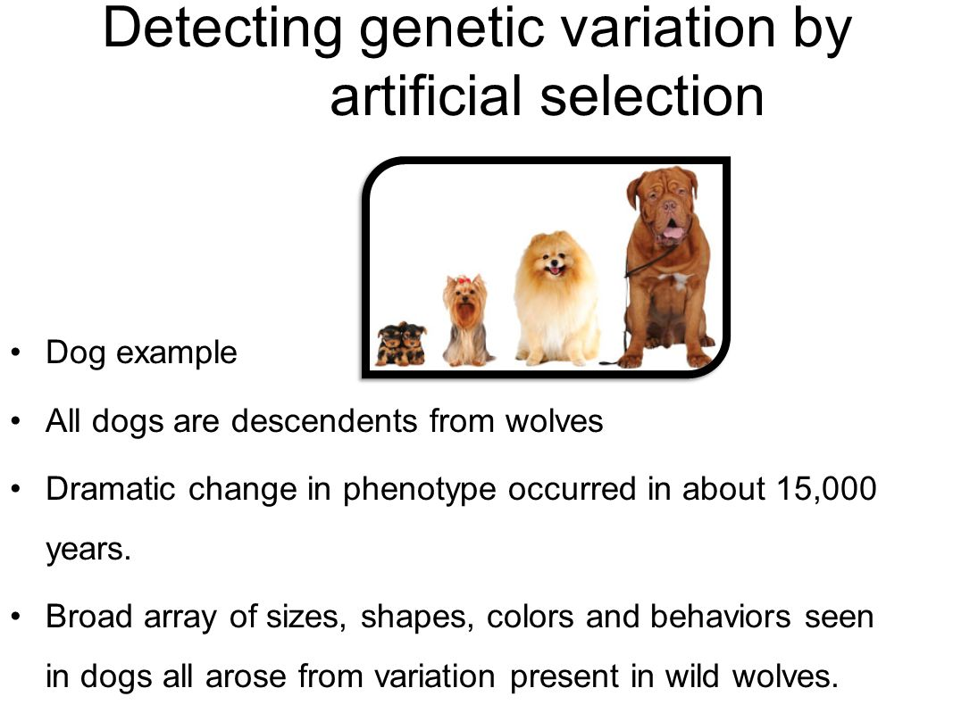 Population And Evolutionary Genetics Ppt Video Online Download