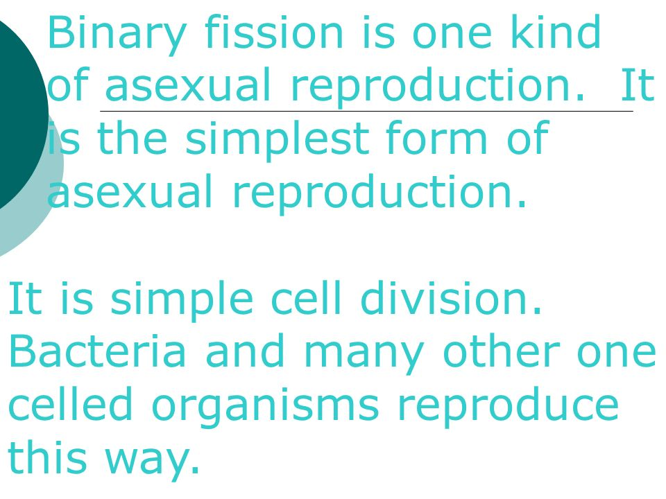 Is binary fission a form of asexual reproduction