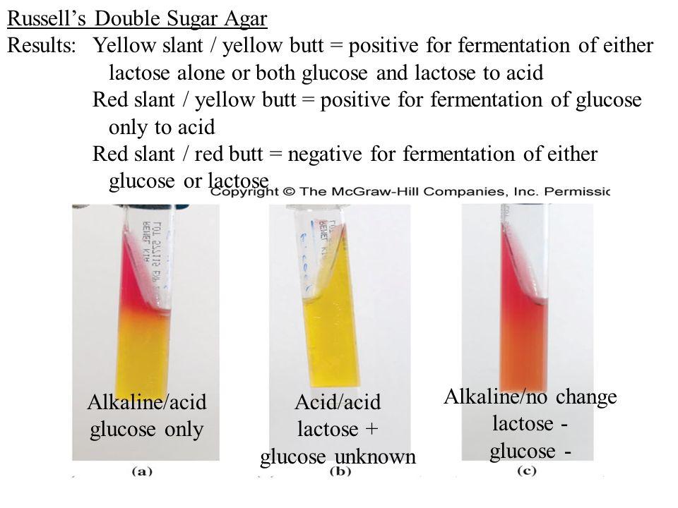 bacillus cereus lactose fermentation