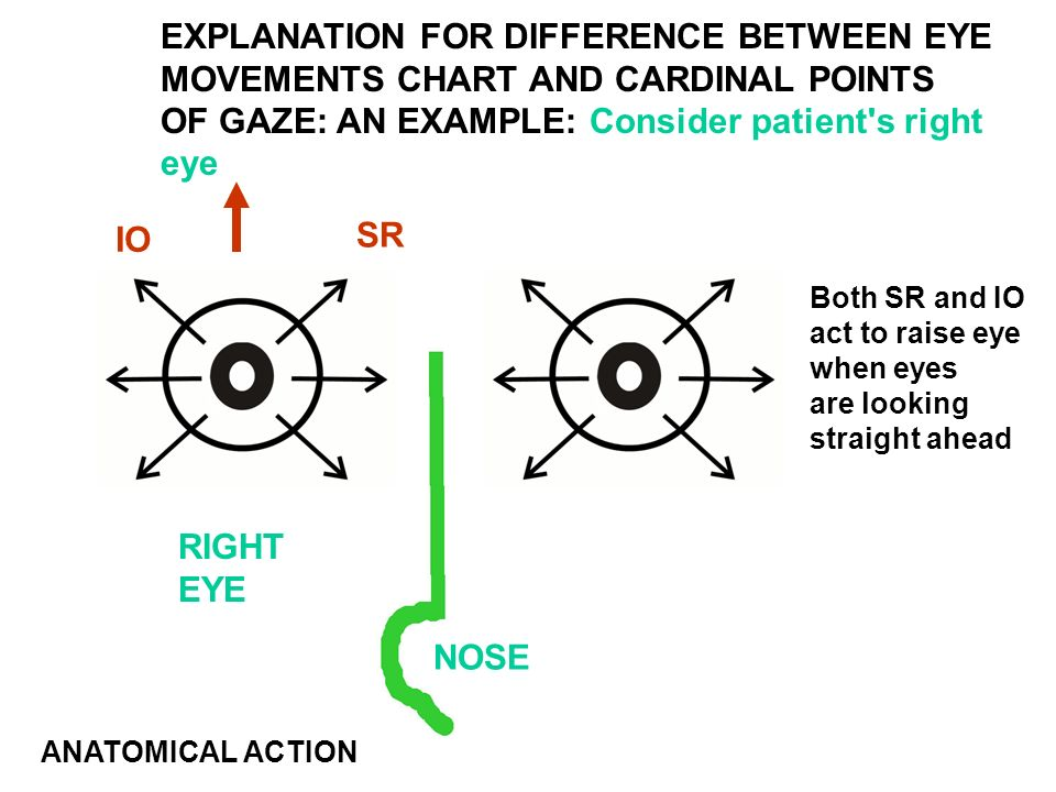 Diagram Of Eye Movements - Trusted Wiring Diagram •