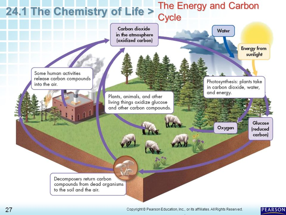 Simple carbon cycle diagram pearson electrical work wiring diagram simple carbon cycle diagram pearson block and schematic diagrams u2022 rh artbattlesu com carbon cycle label ccuart Choice Image