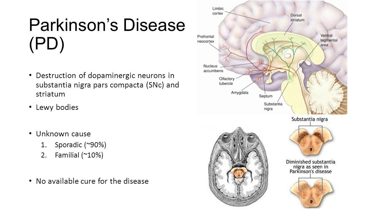 parkinsons answers parkinsons disease - 1280×720