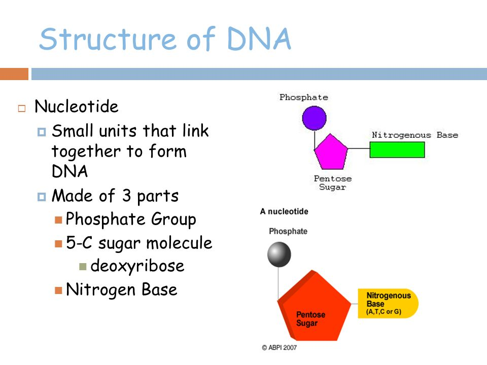 Parts dna molecule diagram electrical drawing wiring diagram dna structure unit 4 part ppt download rh slideplayer com blank dna molecule diagram dna molecule labeled diagram ccuart Choice Image