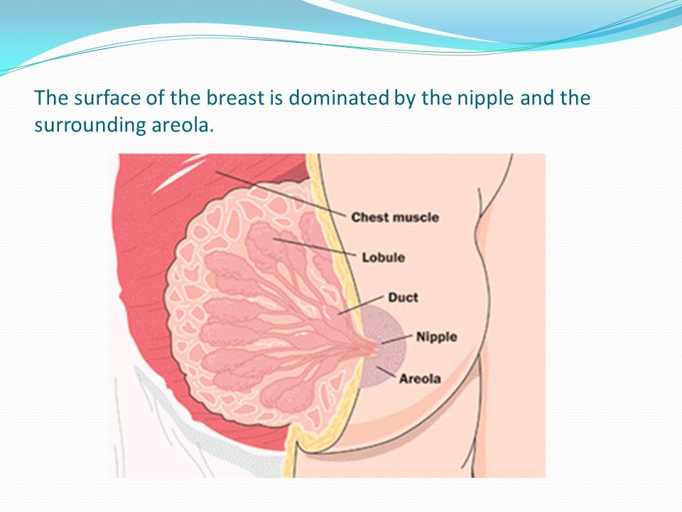 Ultrasound of the Breast Part 1 - ppt video online download