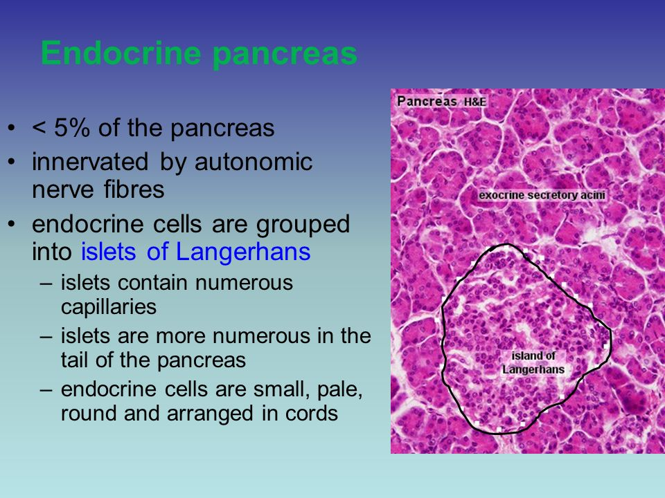 Unit 2 Endocrine Module Histology Of The Endocrine Pancreas Ppt