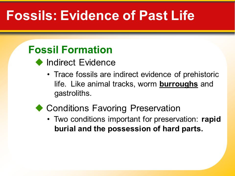indirect dating fossils