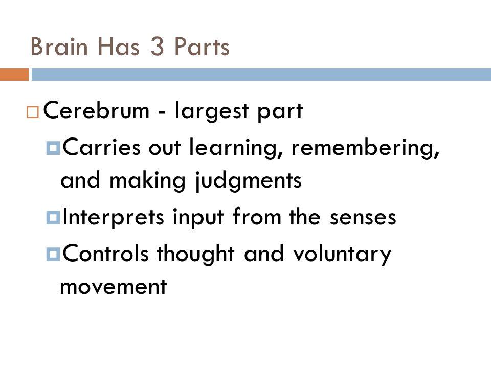 Nervous System Receives Info About Internal External Environ. Worksheet. How The Nervous System Works Worksheet Answer Key At Mspartners.co