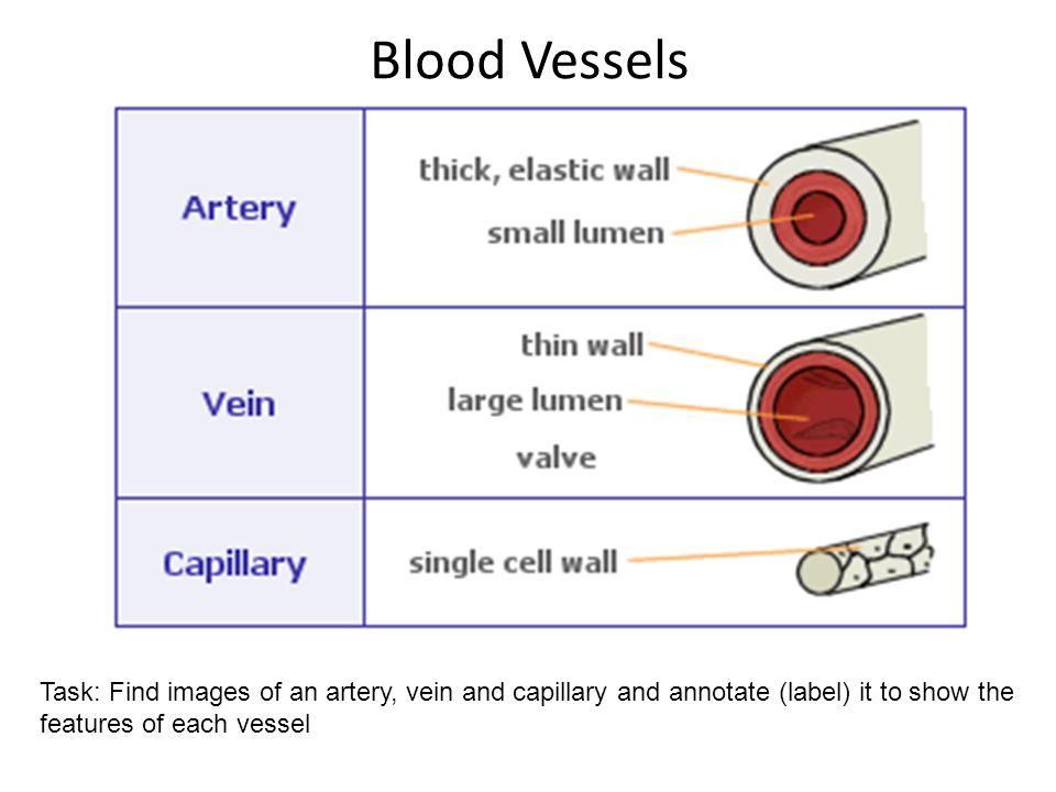 Blood Vessels Interpret And Explain Electrocardiogram Ecg Traces