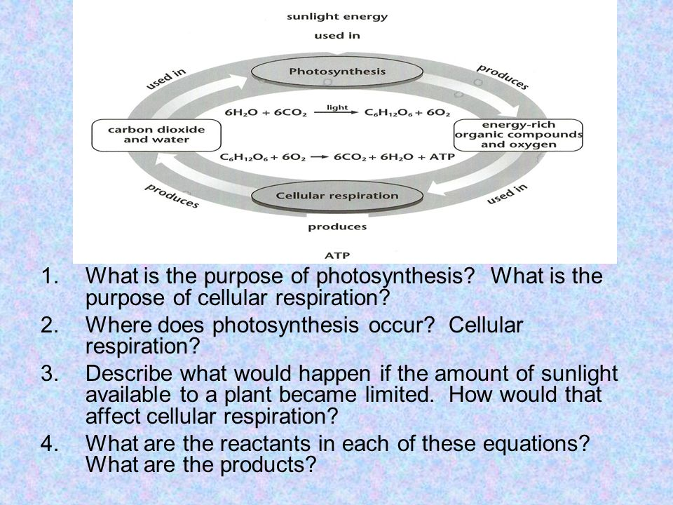 What is the purpose of photosynthesis