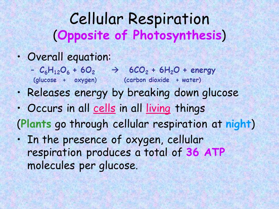 Cellular Respiration (Opposite of Photosynthesis)