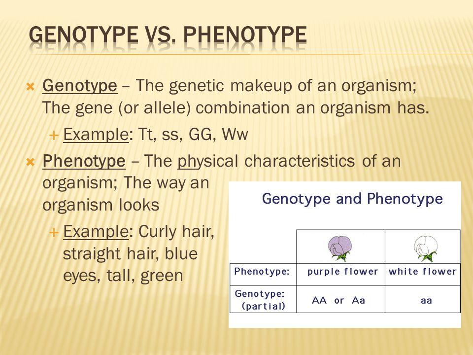 Fundamentals Of Genetics Ppt Video Online Download