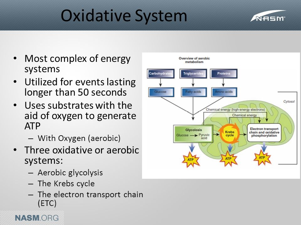 atp resynthesis aerobic energy system Aerobic respiration takes even more chemical reactions to produce atp than either of the above two systems it is the slowest of all three systems - but it can supply atp for several hours or longer, as long as the supply of fuel lasts.