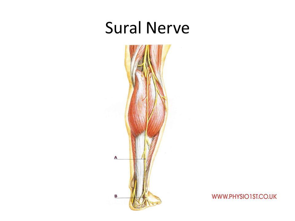 Neuro Anatomy Lumbar Spine Ppt Video Online Download