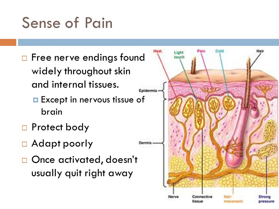 View Free Nerve Endings Skin Model Pictures