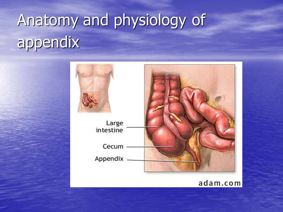 APPENDICITIS. - ppt video online download