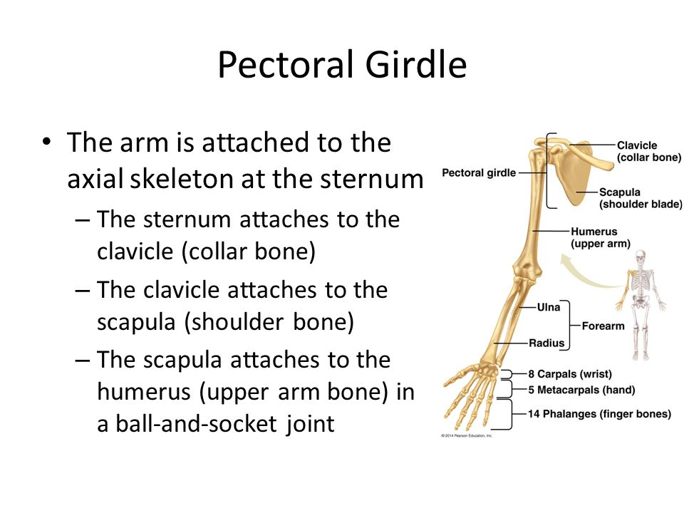 Bones Joints And Injuries Ppt Video Online Download