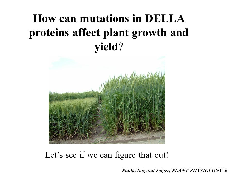 Prospecting for Genes that Fueled the Green Revolution