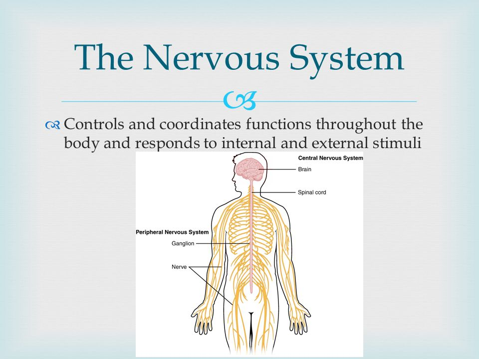 The Nervous System Read 35.2, take notes, and answer questions 1-4 ...