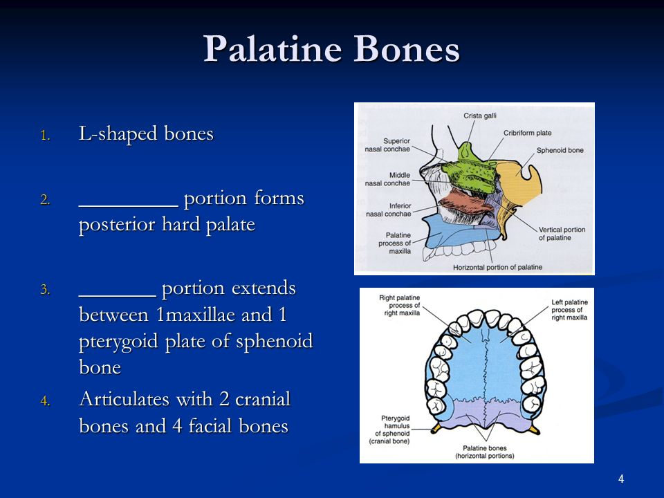 Facial Bone Anatomy & Positioning - ppt video online download